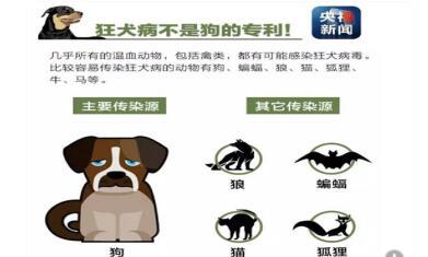 狂犬病与鸟类