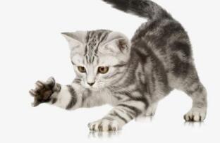 猫抓与狂犬病